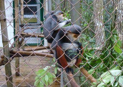 Primatenzentrum im Cuc Phuong Nationalpark